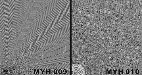 MYH 009 / MYH 010